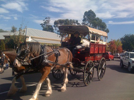 Horses in Hahndorf